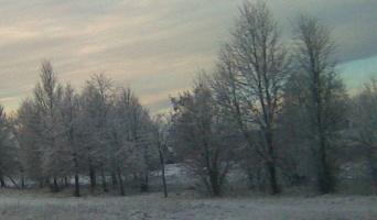 žiema, šerkšnas, 2008